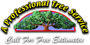 Professional Tree Service Lexington KY